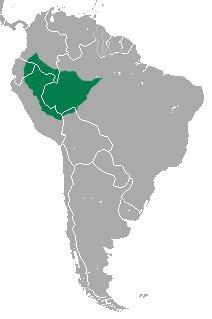 Map of <i>Callithrix pygmaea</i>