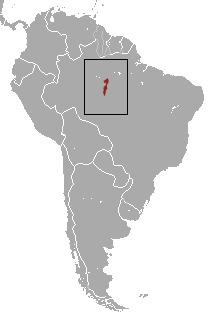 Map of <i>Callithrix mauesi</i>