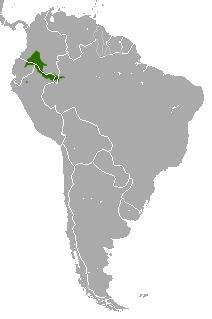 """<span class=""""translation_missing"""" title=""""translation missing: en.medium.untitled.map_image_of, page_name: &lt;i&gt;Saguinus nigricollis&lt;/i&gt;"""">Map Image Of</span>"""