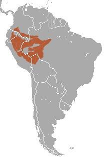 """<span class=""""translation_missing"""" title=""""translation missing: en.medium.untitled.map_image_of, page_name: &lt;i&gt;Saguinus fuscicollis&lt;/i&gt;"""">Map Image Of</span>"""
