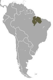 "<span class=""translation_missing"" title=""translation missing: en.medium.untitled.map_image_of, page_name: Black Tamarin"">Map Image Of</span>"
