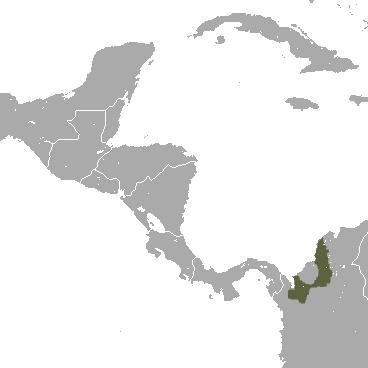 "<span class=""translation_missing"" title=""translation missing: en.medium.untitled.map_image_of, page_name: cotton-top tamarin"">Map Image Of</span>"