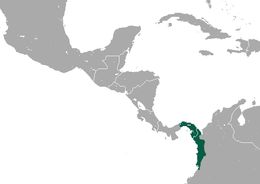 """<span class=""""translation_missing"""" title=""""translation missing: en.medium.untitled.map_image_of, page_name: Geoffroy&#39;s tamarin"""">Map Image Of</span>"""