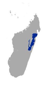 "<span class=""translation_missing"" title=""translation missing: en.medium.untitled.map_image_of, page_name: &lt;i&gt;Propithecus diadema&lt;/i&gt; Bennett 1832"">Map Image Of</span>"