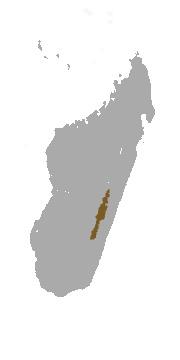 """<span class=""""translation_missing"""" title=""""translation missing: en.medium.untitled.map_image_of, page_name: &lt;i&gt;Propithecus edwardsi&lt;/i&gt; Grandidier 1871"""">Map Image Of</span>"""
