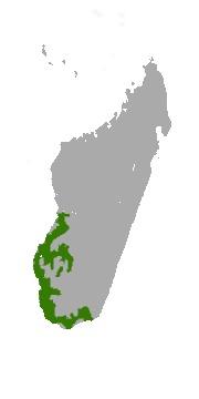 "<span class=""translation_missing"" title=""translation missing: en.medium.untitled.map_image_of, page_name: Verreaux&#39;s Sifaka"">Map Image Of</span>"