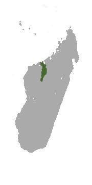 "<span class=""translation_missing"" title=""translation missing: en.medium.untitled.map_image_of, page_name: Crowned Sifaka"">Map Image Of</span>"