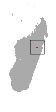 "<span class=""translation_missing"" title=""translation missing: en.medium.untitled.map_image_of, page_name: Alaotra Reed Lemur"">Map Image Of</span>"