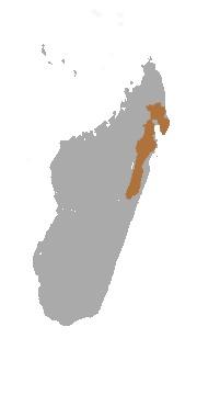 Map of Hairy-eared Dwarf Lemur