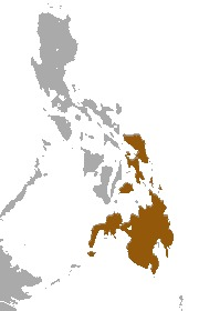 Image of Philippine Flying Lemur