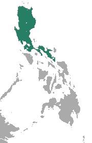 "<span class=""translation_missing"" title=""translation missing: en.medium.untitled.map_image_of, page_name: Luzon Fruit Bat"">Map Image Of</span>"