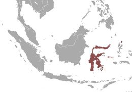 Map of Short-nosed Fruit Bat