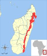 """<span class=""""translation_missing"""" title=""""translation missing: en.medium.untitled.map_image_of, page_name: Broad-striped Malagasy Mongoose"""">Map Image Of</span>"""