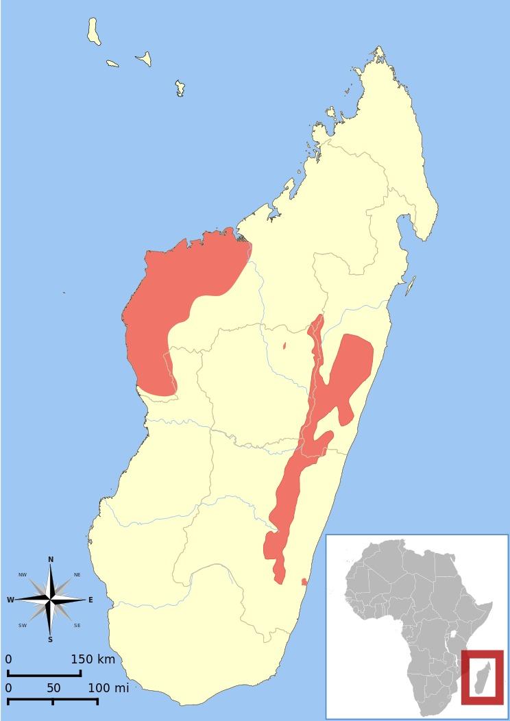"<span class=""translation_missing"" title=""translation missing: en.medium.untitled.map_image_of, page_name: Bamboo Lemur"">Map Image Of</span>"