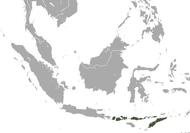 "<span class=""translation_missing"" title=""translation missing: en.medium.untitled.map_image_of, page_name: Lombok Flying Fox"">Map Image Of</span>"