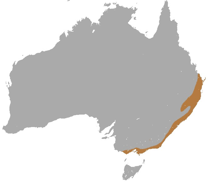 Map of Gray-headed flying fox