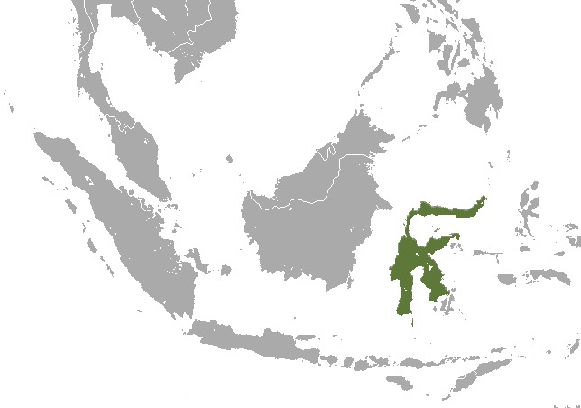 "<span class=""translation_missing"" title=""translation missing: en.medium.untitled.map_image_of, page_name: Stripe-faced fruit bat"">Map Image Of</span>"