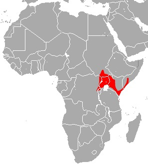 "<span class=""translation_missing"" title=""translation missing: en.medium.untitled.map_image_of, page_name: Eloquent Horseshoe Bat"">Map Image Of</span>"