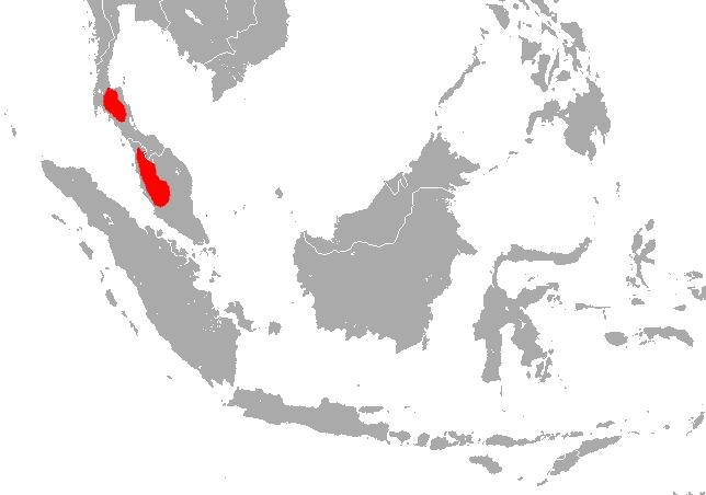 Image of Peninsular Horseshoe Bat