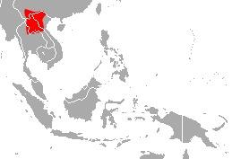Image of Thai Horseshoe Bat
