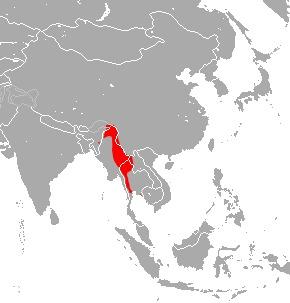 "<span class=""translation_missing"" title=""translation missing: en.medium.untitled.map_image_of, page_name: Dobson&#39;s Horseshoe Bat"">Map Image Of</span>"