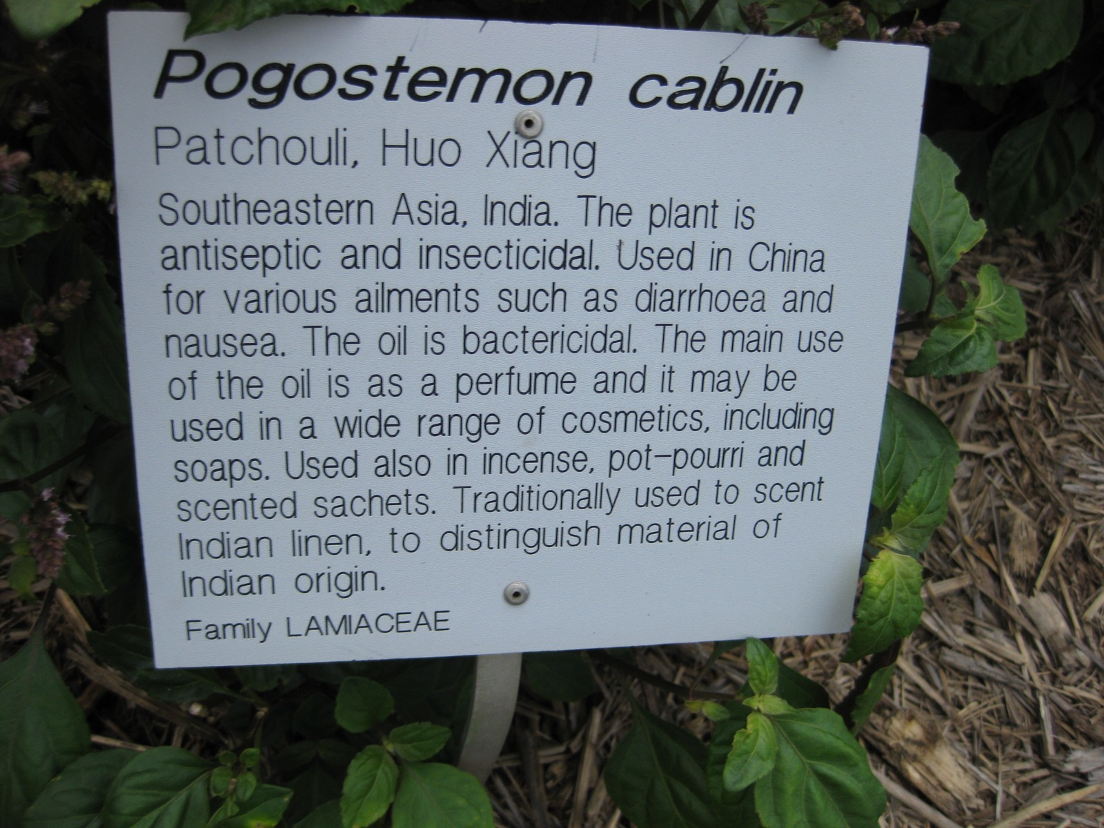 Image of patchouli