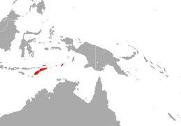 Image of Indonesian Tomb Bat