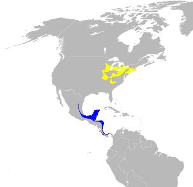 Map of <i>Vermivora pinus</i>