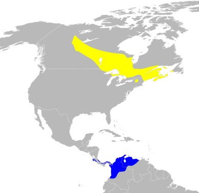 Map of jawed fish