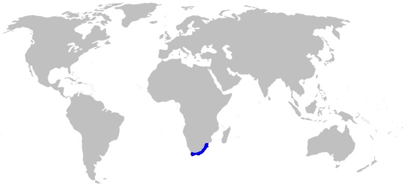 Map of Lily of the Nile