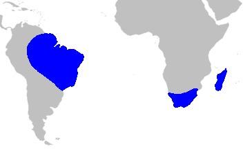 Map of bird-of-paradise family
