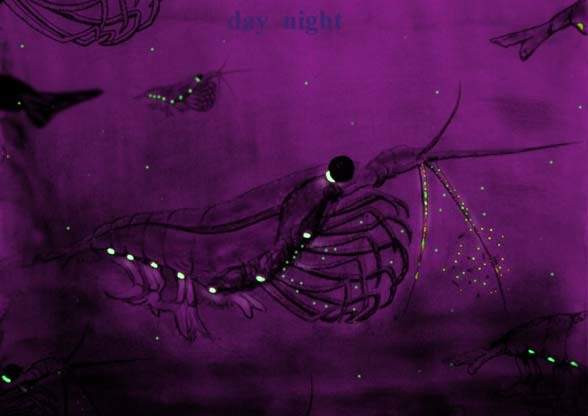 Image of Antarctic Krill