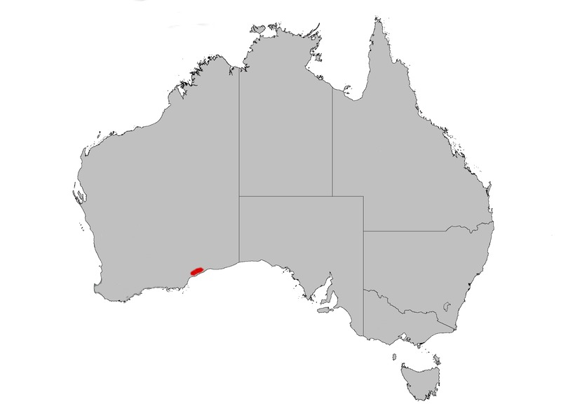 "<span class=""translation_missing"" title=""translation missing: en.medium.untitled.map_image_of, page_name: &lt;i&gt;Banksia epica&lt;/i&gt; A. S. George"">Map Image Of</span>"