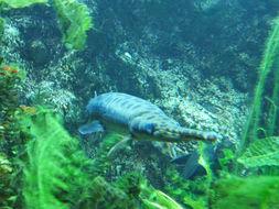 Image of Cayman