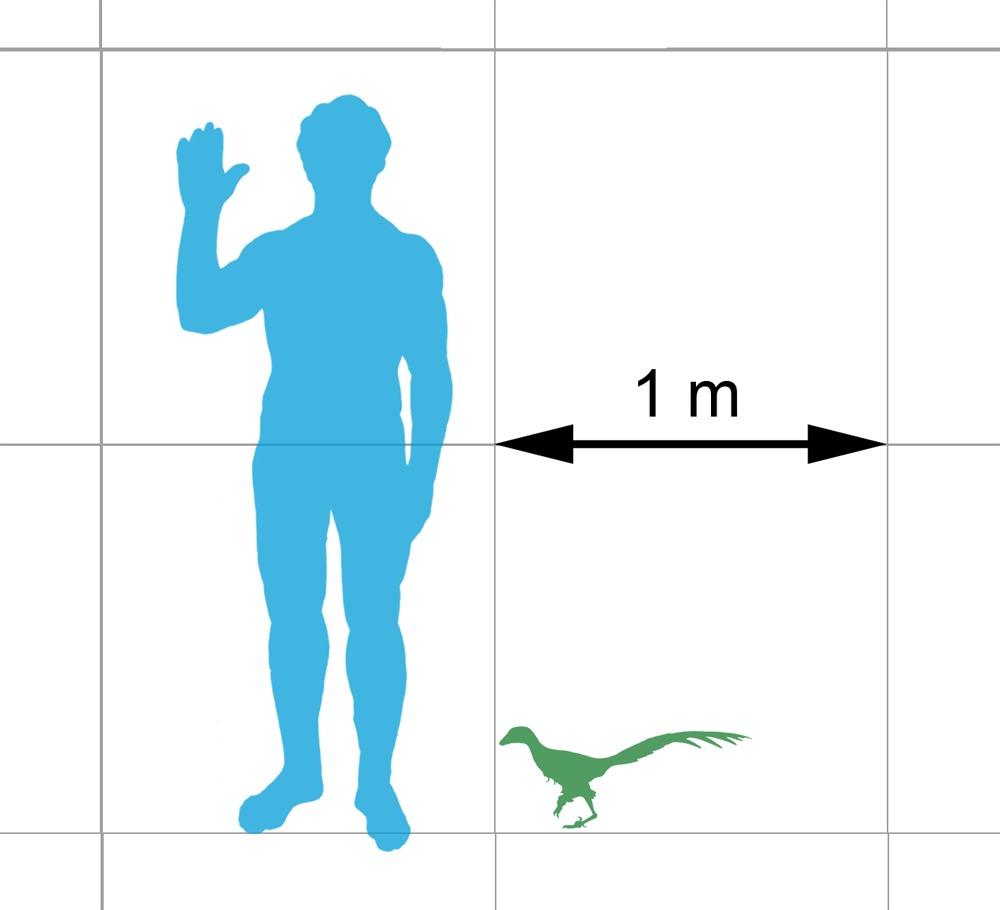 Image of Troodontidae