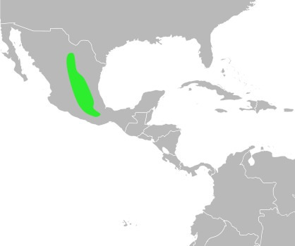 Map of <i>Bufo occidentalis</i>