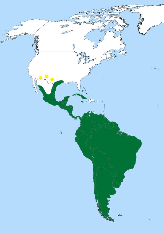 Map of Neotropic Cormorant
