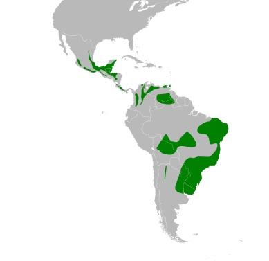 Map of Basileuterine Warblers