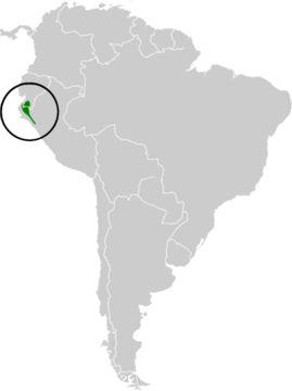 "<span class=""translation_missing"" title=""translation missing: en.medium.untitled.map_image_of, page_name: Three-banded Warbler"">Map Image Of</span>"