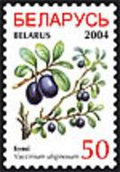 Image of alpine bilberry