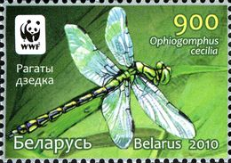Image of Green Gomphid