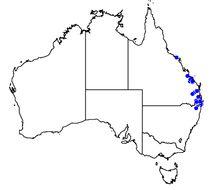 Map of <i>Pedinogyra rotabilis</i> (Reeve 1852)