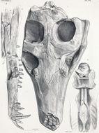 Image of Pholidosaurus