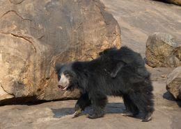 Image of bears