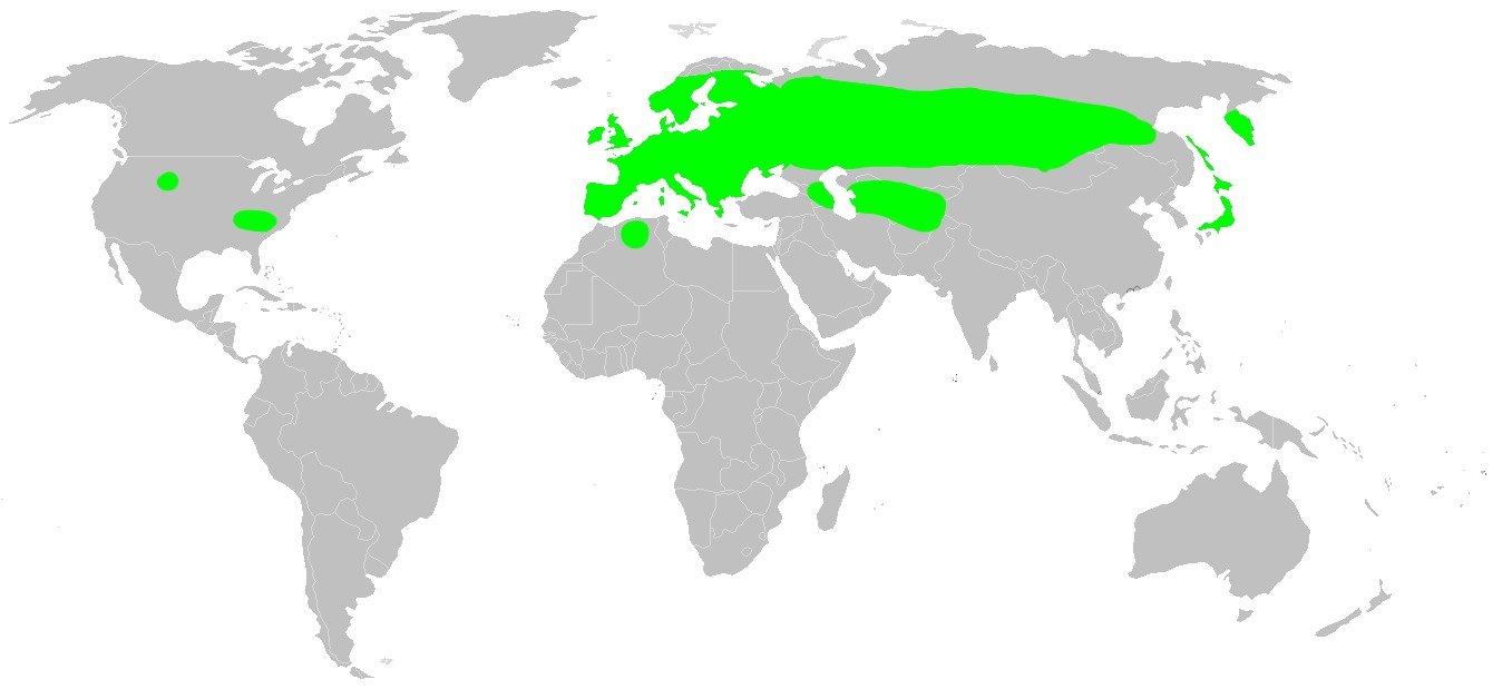 """<span class=""""translation_missing"""" title=""""translation missing: en.medium.untitled.map_image_of, page_name: &lt;i&gt;Evarcha falcata&lt;/i&gt; (Clerck 1757)"""">Map Image Of</span>"""