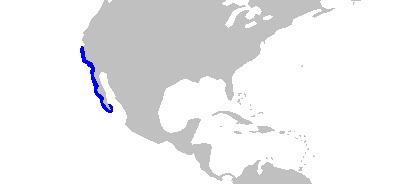 Image of California Thornback