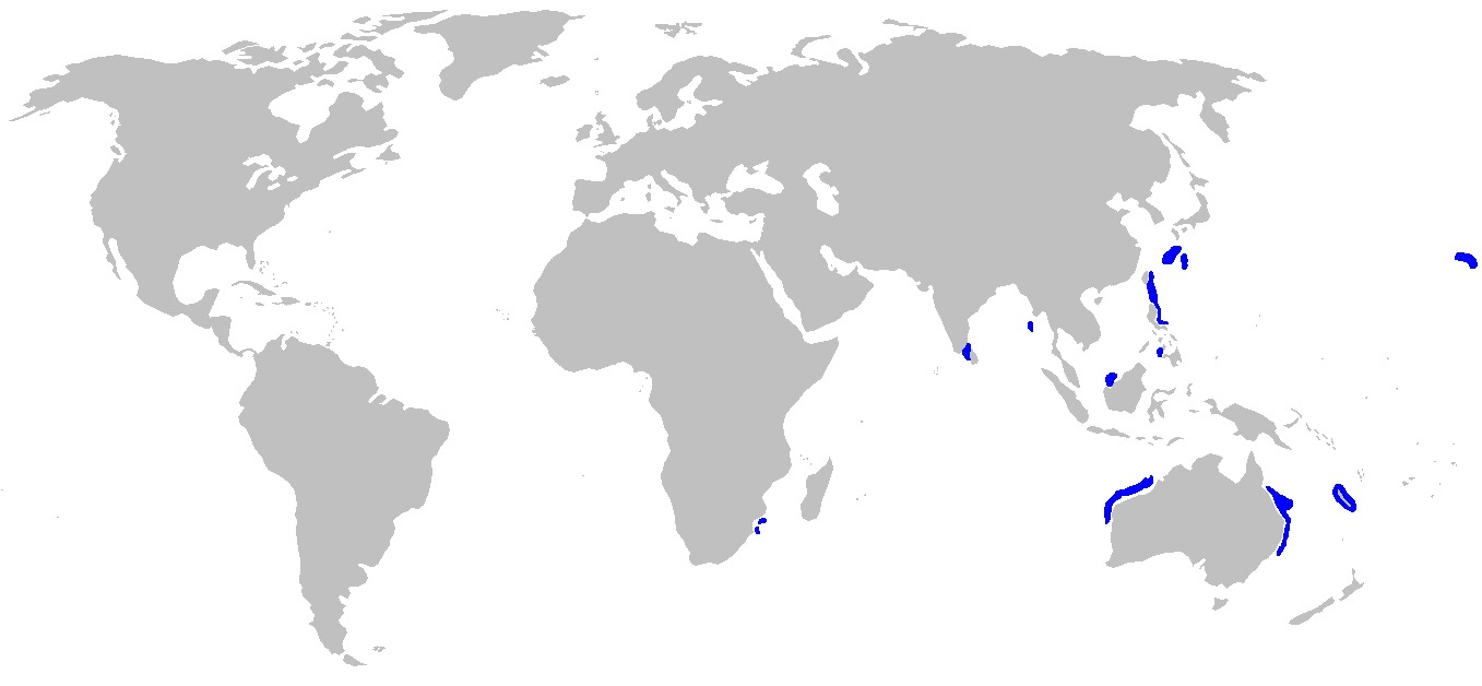 Image of Deepwater Stingray
