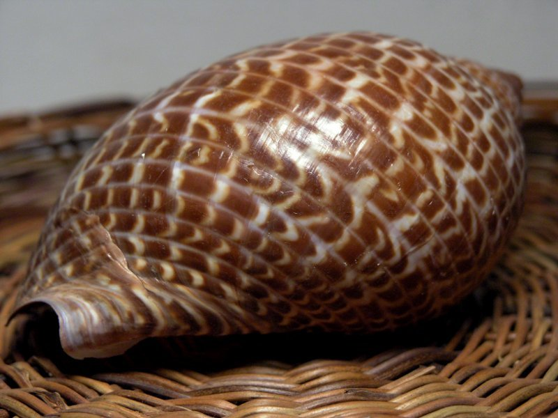 Image of Partridge tun