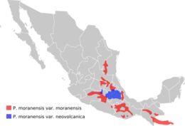 "<span class=""translation_missing"" title=""translation missing: en.medium.untitled.map_image_of, page_name: &lt;i&gt;Pinguicula moranensis&lt;/i&gt; Kunth"">Map Image Of</span>"