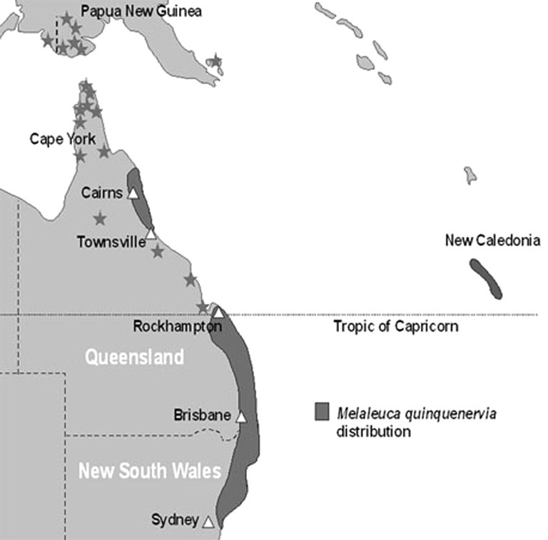 Map of paperbark